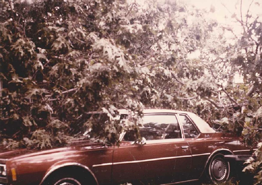 Car - tree on top