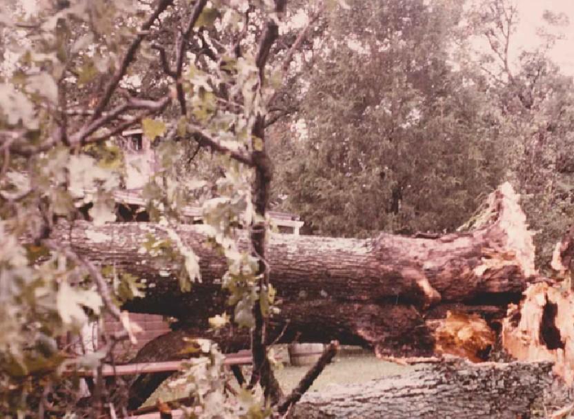 Club house tree fallen