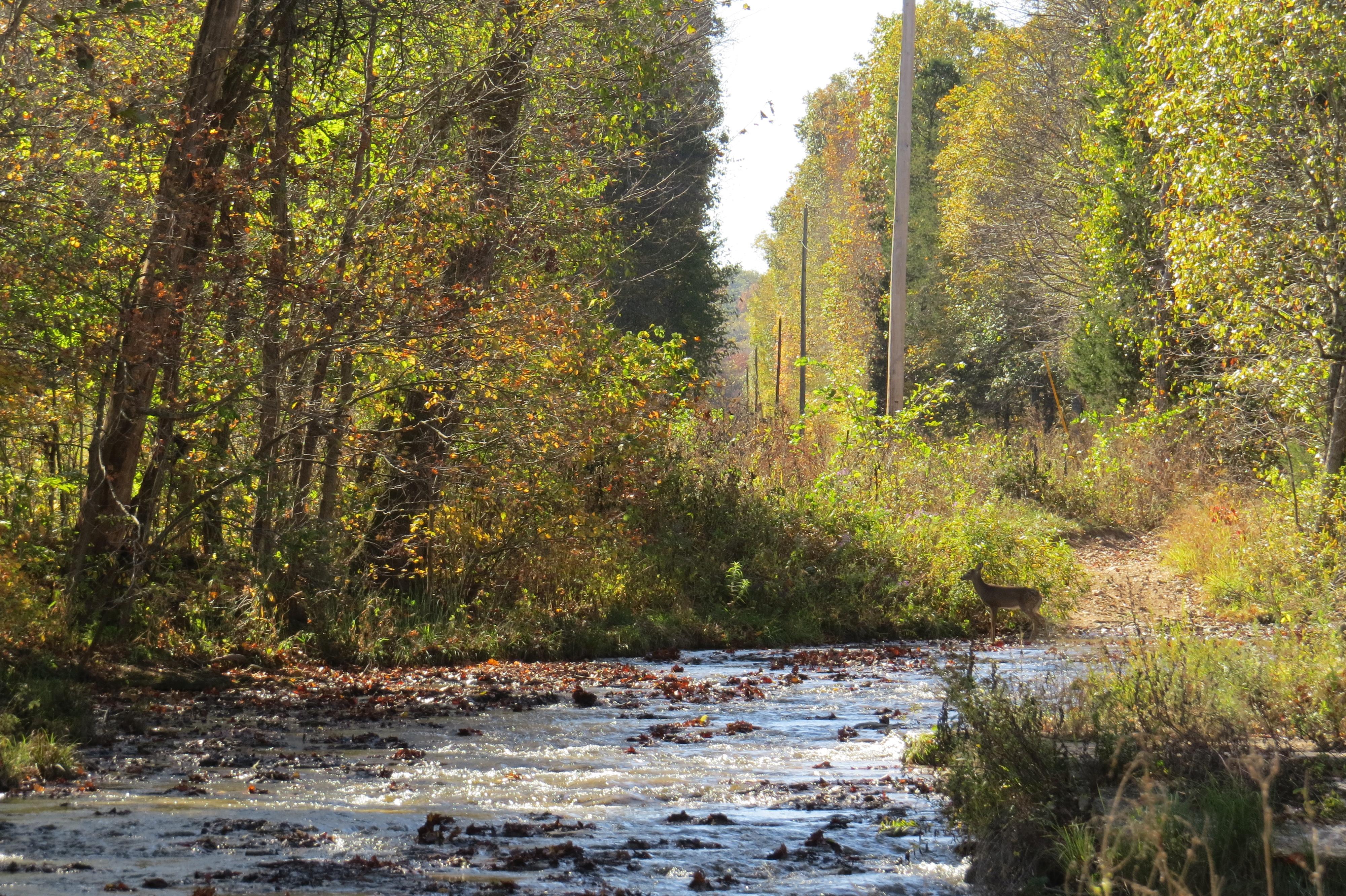 Creek in front of deer - path